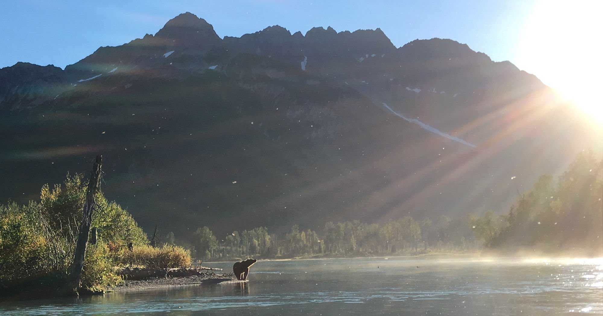 Experience Alaska Wildlife Up Close