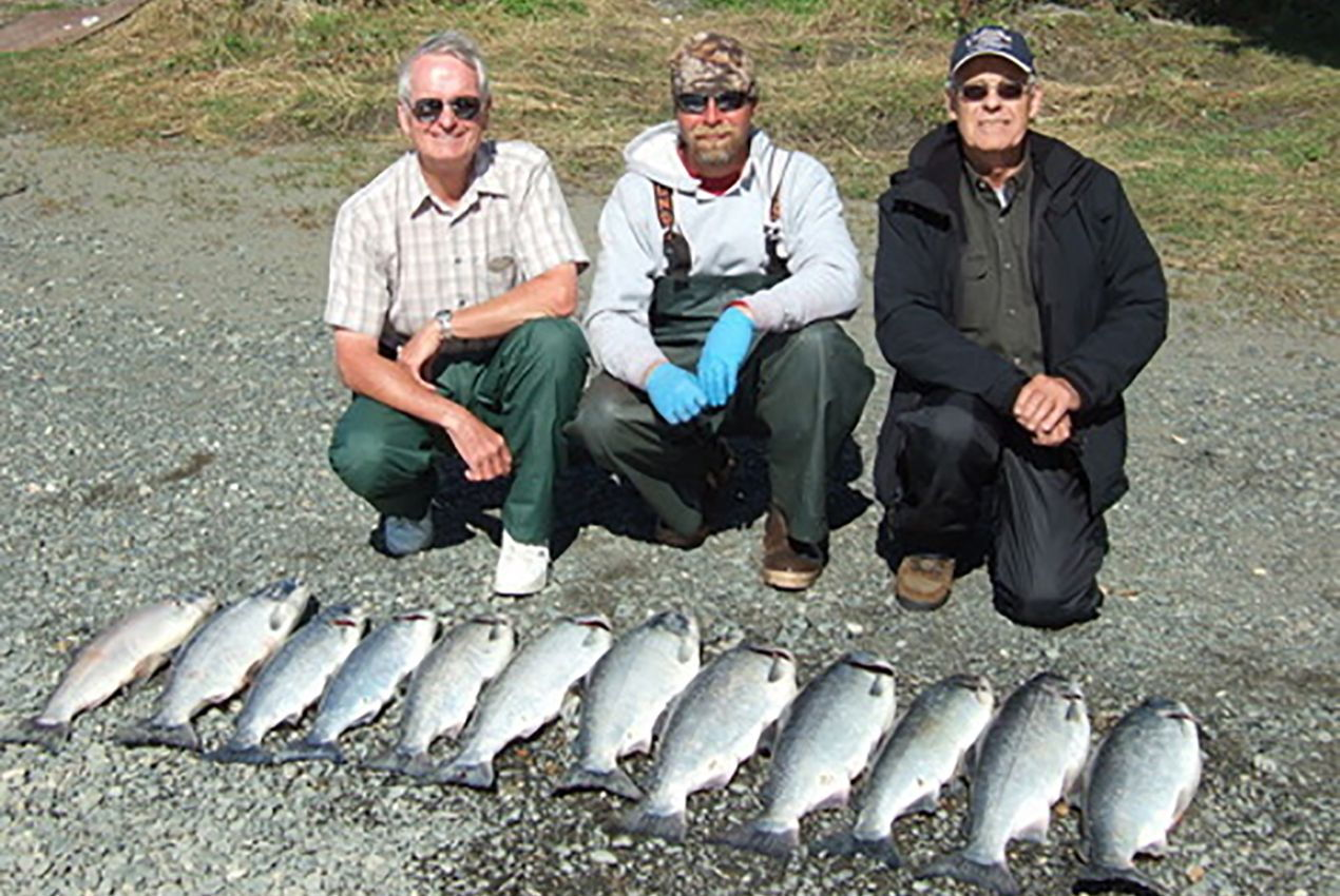tons of silver salmon